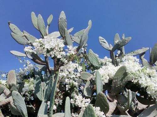 Flora i Fauna w Ziemi Świętej